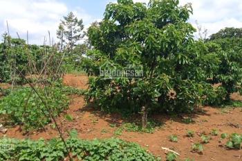 Cần bán đất hẻm 115 Lam Sơn, TP Bảo Lộc