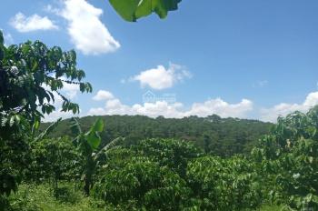 Cần bán lô đất đẹp view đồi thông đường khúc thừa dụ xã Đam Bri diện tích: 8500m2