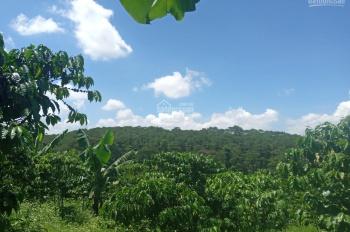 Cần bán lô đất đẹp view đồi thông đường Khúc Thừa Dụ, xã Đambri