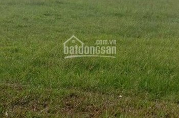 Cho thuê 3 mẫu đất thuộc xã An Nhơn Tây huyện Củ Chi