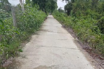 Bán 10 công đất trồng thanh long ruột đỏ, Tân Phước, Tiền Giang