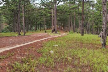 Chính chủ cần bán vườn hồng giòn làm nhà gỗ ngoại ô nghỉ dưỡng tại Cầu Đất, TP Đà Lạt