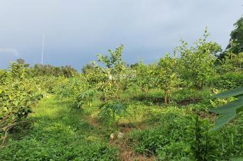 Bán mảnh đất đẹp và đáp ứng tất cả tiêu chí tại Lương Sơn, Hòa Bình