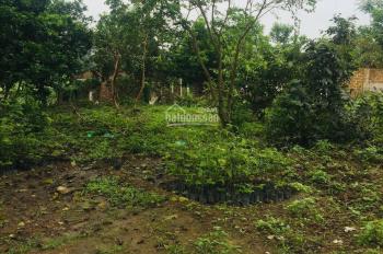 Cần bán lô đất DT 2497m2 làm nhà vườn tuyệt đẹp tại Phú Mãn, Quốc Oai, Hà Nội, giá rẻ bất ngờ