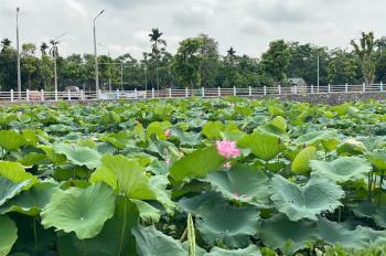 Cần bán đất nền Hòa Lạc, view hồ sen Lotus, cạnh khu CNC, sổ đỏ trao tay từ 1 tỷ, LH: 0936469996
