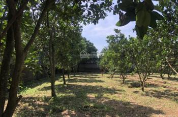 2500m2 xung quanh là cánh đồng thoáng mát tại Nhuận Trạch Lương Sơn Hòa Bình phù hợp làm nghỉ dưỡng