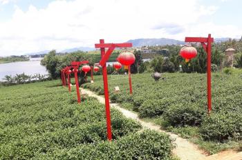Bán đất cách chùa Trà 20m, SHR, DT = 347m2
