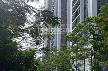 Bán nhà Kim Giang, mặt tiền thật to 7m, kinh doanh tuyệt đỉnh, DTXD 60m2. LH 0985299789