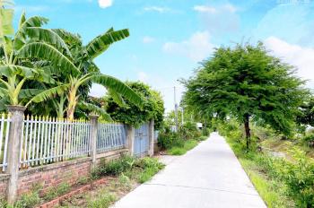 Bán 4300m2 nhà vườn đang canh tác tại xã Lý Văn Lâm