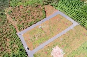 Dưới 700 triệu, lô đất trên đồi, view vườn chè, cafe xanh tươi, hạ tầng hoàn chỉnh. LH 0903128018