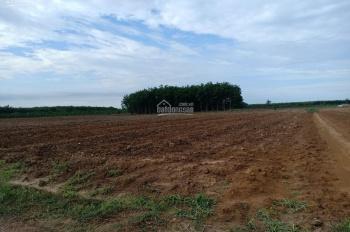 Chính chủ cần bán gấp 3000m2 đất trống, đẹp bằng phẳng, LH: 0983586771