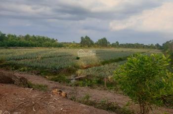 Bán đất 11.248m2, 4.3 tỷ, xã Thạnh Lợi, Bến Lức. LH 0902999234