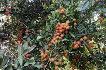 Bán vườn trái cây 8546m2, ven suối tại xã Sông Ray, Cẩm Mỹ, Đồng Nai