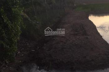 Chủ cần bán 1000m2 (20x50m) đất lúa ở ấp 4 xã An Thạnh, Bến Lức
