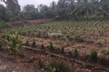 Chú chủ cần bán 4700m2 đất cây hàng năm ở xã Tân Hoà, Bến Lức