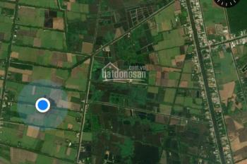 Cần bán 10.000m2 (81x111m) cây hàng năm khác. Ở kênh 8 xã Tân Hoà, Bến Lức