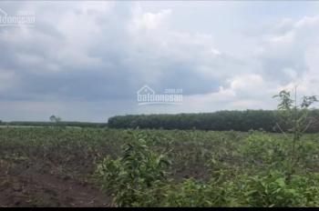 Bán 100ha đất nông trường Xuyên Mộc - BRVT. LH: 0903010310