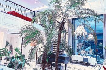 Bán tòa nhà mặt phố Khúc Thừa Dụ, Quận Cầu Giấy, thang máy, thông sàn 8T MT 5.6m 32 tỷ 0972558861