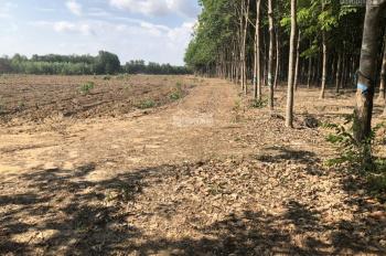 Bán diện tích đất lớn tại xã Phước Bình, Long Thành từ 5 sào 6 mẫu 16 mẫu. LH 0907.717.899