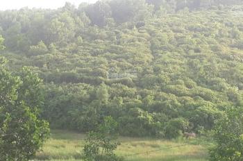 Cần chuyển nhượng gấp 7ha đất rừng sản xuất bám hồ tại Lương Sơn Hòa Bình, có cây ăn quả