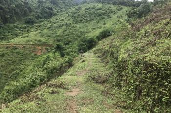 Nhượng 6ha đất rừng sản xuất xã Hợp Kim, Kim Bôi Hòa Bình giá 1,4 tỷ LH 0988.168.636