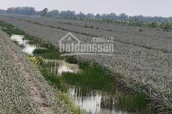 Chính chủ cần bán gấp 5.3 hecta đất khóm đang thu hoạch đường Tỉnh Lộ 867 vào 200m. Giá 15 tỷ TL