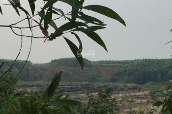 Cho thuê mặt bằng 5000m2, trung tâm thị trấn Vĩnh An