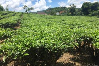 Bán đất nghỉ dưỡng diện tích 4200m2, view đẹp, TP Bảo Lộc