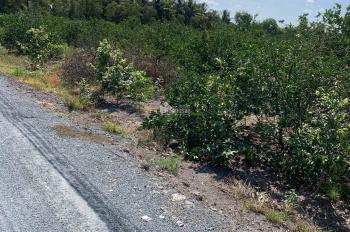 Cần bán lô đất vườn 1000m2 gần ủy ban nhân dân xã Thạnh Hòa, xe ô tô vào tận nơi, cách 816 1,2km