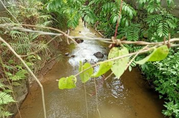Sở hữu ngay lô đất nhỏ nhỏ xinh sổ hồng HN, 301m2 view suối tuyệt đẹp tại Yên Bình. LH 0977803102