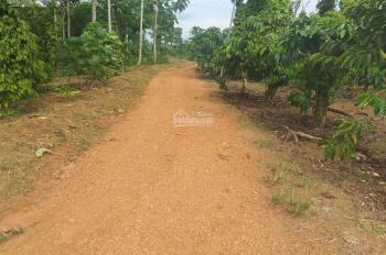 Bán đất nghỉ dưỡng diện tích 6200m2, giá rẻ TP Bảo Lộc