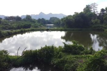 Cần bán DT 18900m2 (1,9ha) có 400m2 TC, đất bằng phẳng, có hồ nước nhỏ, đã trồng nhiều cây ăn quả
