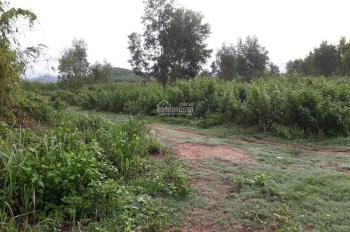 Đất trang trại Khánh Vĩnh làm nhà vườn nghỉ dưỡng. Lh 0983802243