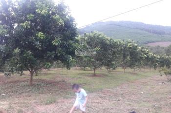 Nhượng lại 2.2ha đất rừng sản xuất, đang trồng khoảng 1000 gốc cam, bưởi tại Kim Bôi, Hòa Bình