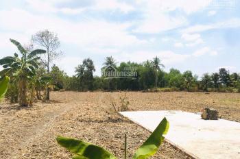 Cần bán miếng đất vườn 1250m2 ở Bến Lức Long An