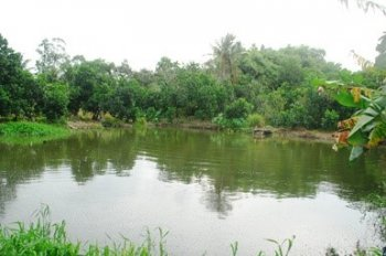 Bán trang trại 5.5 ha tại Tân Ninh, Châu Pha, BTVT, giá 29.5 tỷ, LH: 093.4444.552 - Anh Dũng