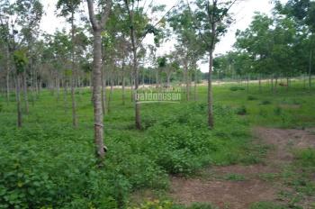 Bán đất mặt nhựa lộc Lộc Thịnh, Lộc Ninh, Bình Phước