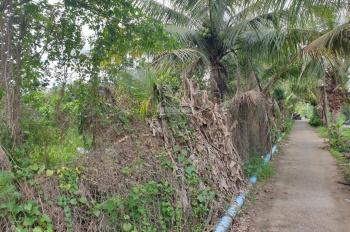 Bán 8592,8m2 (8 công 592,8m2) vườn có nhà Nhơn Thạnh TP Bến Tre sát ranh Phú Nhuận LH 0907426968