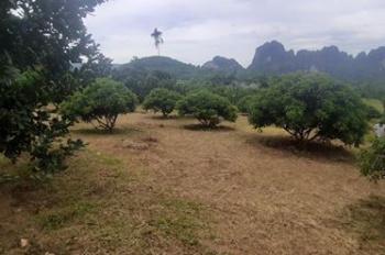 4700m2 bám núi đá ở Lương Sơn giá chỉ hơn 2 tỷ
