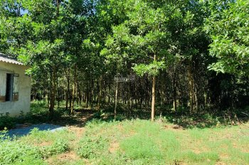 Gia đình cần bán gấp lô đất thổ cư 3200m2 tại Hòa Sơn, Lương Sơn, Hòa Bình