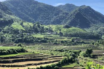 Cần bán gấp 40ha đất rừng sản xuất bám mặt hồ lớn tại Cao Phong, Hoà Bình
