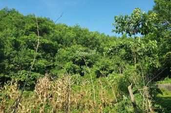 Bán 12ha đất rừng sản xuất tại xã Cao Dương, huyện Lương Sơn, Hòa Bình