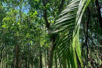 Bán đất Hòa Ninh nhà vườn đẹp cho khách, diện tích khủng 30.000m2 có 300m2 đất ở