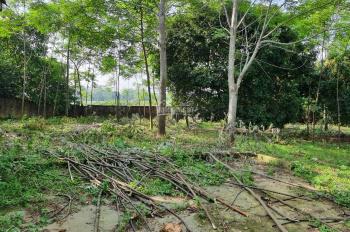Bán gấp 2500m2 đất Lương Sơn, Hòa Bình, vuông góc, phẳng lỳ, view cánh đồng