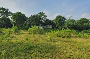 Bán gấp 7200m2 đất Lương Sơn, Hòa Bình vuông góc, phẳng lỳ, có ao, có cây ăn quả