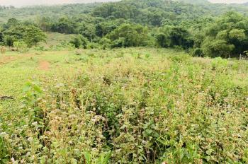 Gia đình bán rẻ lô đất thổ cư diện tích 4,5ha tại Kỳ Sơn, tỉnh Hòa Bình