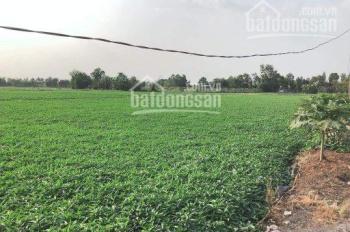 Cần bán gấp lô đất tại Ấp 8, Bình Mỹ, Củ Chi, TP. HCM, giá cực rẻ chỉ 7tr/m2