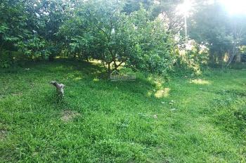 Cần bán 50 sào đất thổ cư và vườn, trồng nhiều loại cây trên đất