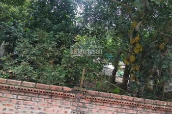 Bán lô đất sổ hồng đầu tư tại xóm Miễu, Tiến Xuân, Thạch Thất, gần đại học Quốc Gia Hà Nội giá tốt