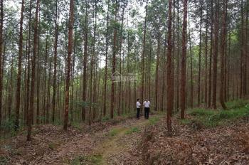 Bán đất rừng sản xuất ở Tràng Định, Lạng Sơn diện tích từ 3ha - 30ha